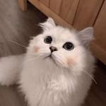 高清超萌可爱的猫咪微信情侣头像图片