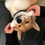 微信头像动物可爱狗 高清卖萌的可爱狗子头像图片