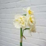 qq头像花卉的图片 静物好看的图片头像带花