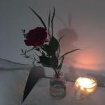 一支玫瑰头像 高清适合做头像的玫瑰花图片