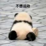 高清带字的真实可爱大熊猫表情包头像 不想系列图片头像