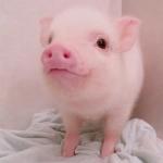 萌宠动物搞笑可爱头像 超级可爱的萌宠图片头像高清大图