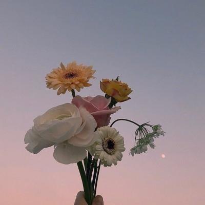 唯美一朵花头像