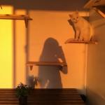 超清唯美有意境的黄昏落日头像图片