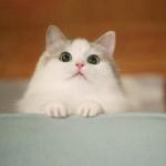 小猫头像可爱萌萌哒图片 高清好看的可爱头像萌萌哒猫咪精选