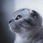 微信宠物头像高清图片
