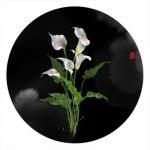微信一支花头像图片大全 高清各种花的头像微信头像精选