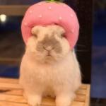 宠物兔头像 高清胖乎乎可爱的宠物兔子头像图片