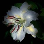 高清唯美的安静静谧花朵植物头像图片