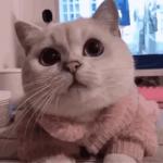 qq动物萌宠头像 高清真实可爱的猫猫狗狗宠物头像图片