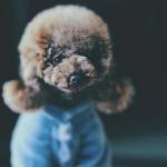 超可爱宠物头像 高清唯美有意境的宠物图片萌图头像