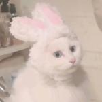 高清可爱的呆萌小动物头像图片精选