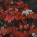 漂亮的花朵微信头像 高清暗色调的清新花朵图片头像