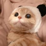 最萌猫咪头像 高清好看的萌系猫咪头像图片