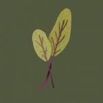 高清好看的可爱蔬果插画图片头像