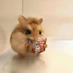 微信动物萌宠头像 高清呆萌可爱的小动物头像图片
