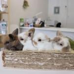 微信兔子头像照片,高清超可爱真兔子图片头像