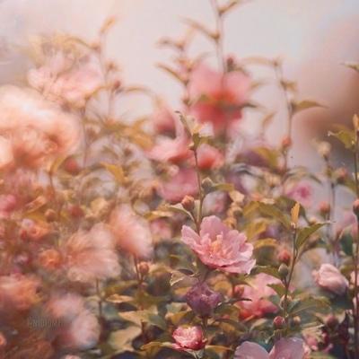 花唯美意境头像