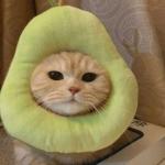 微信头像可爱猫咪 高清超萌好看的高清微信猫咪头像图片