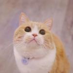 唯美个性可爱猫咪头像 高清清新超萌的可爱猫咪头像图片