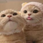 两只猫咪情侣头像 高清可爱两个猫咪的情头大全图片
