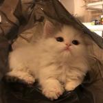猫咪照片可爱头像 高清超萌的可爱猫咪qq图片头像