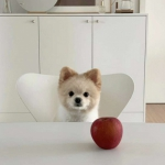小狗微信头像可爱 高清可爱的小狗萌照片微信头像图片
