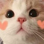 可爱的猫图片头像 高清超萌的可爱小猫照片头像