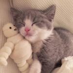 微信爱萌宠头像大全 高清可爱的微信萌宠头像小猫小狗图片
