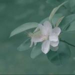 qq头像唯美小清新植物 高清好看的小清新植物头像唯美图片