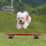 小狗图片萌死人头像,跳跃奔跑的头像狗狗可爱卖萌照片
