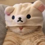 可爱猫咪头像超萌,高清好看的可爱猫咪头像萌图片