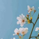 微信头像清新花朵,高清唯美的微信头像花朵清新淡雅图片
