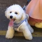 男朋友是宠物系列情头,高清可爱的一人一宠物情侣头像图片