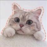 微信头像宠物可爱,高清可爱软萌的小宠物头像图片大全