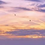 黄昏风景微信头像高清,唯美金色的黄昏头像微信风景图片
