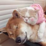 可爱猫咪狗狗情头一对图片