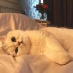 猫咪照片可爱的头像,高清适合做头像的猫咪照片