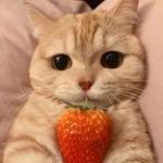 微信可爱宠物头像,高清超治愈超可爱宠物头像图片