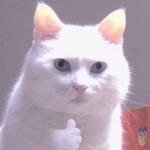 2020年猫微信头像图片,高清2020超可爱的猫咪头像精选