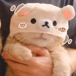 可爱小猫猫情头,高清可爱的小猫情头超萌图片