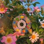 风景鲜花头像图片,高清清新温馨花朵头像唯美图片