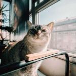 可爱清新猫咪头像,高清可爱小清新猫咪卖萌微信头像图片
