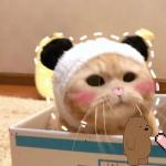 橘猫情侣头像一对两张,高清可爱的橘猫sally情侣头像图片
