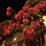 花圃风景头像,高清唯美花圃的微信头像图片