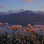 微信头像风景鲜花,高清唯美的漂亮风景鲜花图片头像