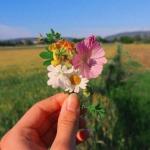 qq小清新鲜花头像,高清好看的小清新鲜花头像唯美图片