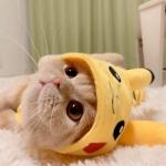 猫咪可爱卖萌微信图片