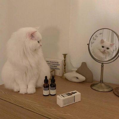 微信猫猫头像