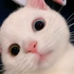 高清超萌可爱的猫图片头像